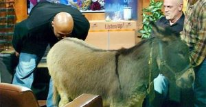 Kad je Čarls Barkli poljubio magarca u zadnjicu fb