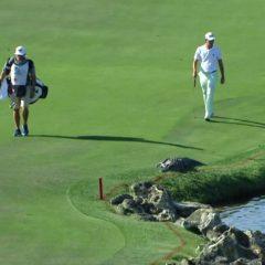 Kada je golfer bežao od aligatora